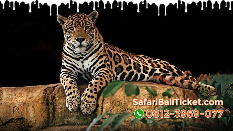Jual Tiket Promo Bali Safari Park Domestik WNI Ransiki