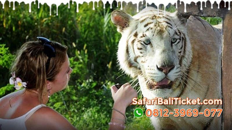 Harga Tiket Bali Safari Park Domestik WNI Amuntai