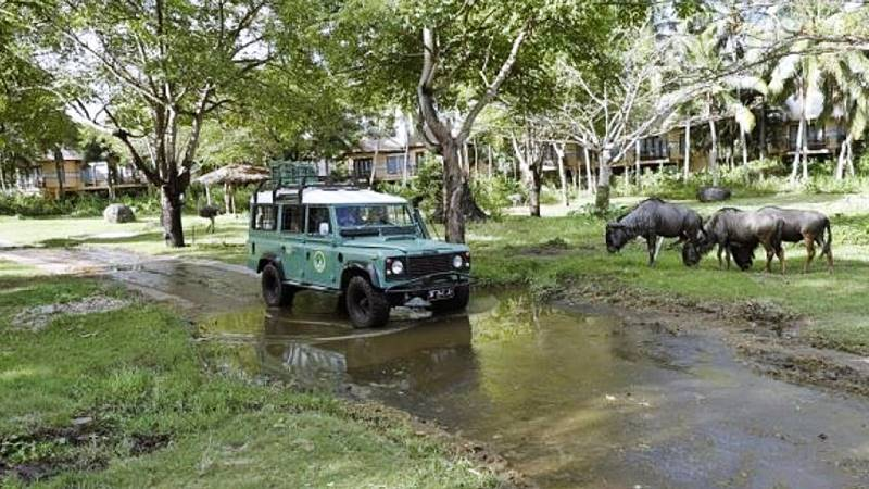 Leopard 4x4 safari