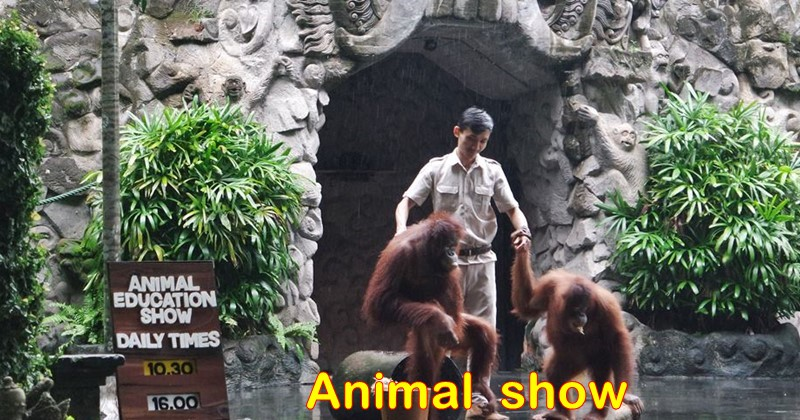 Jungle hopper package ticket with Animal Show