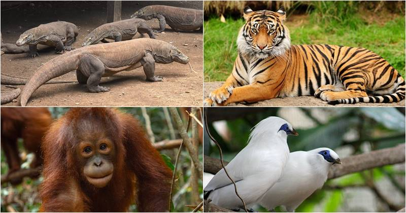 What To Bring On Bali Safari Park Visit? 2