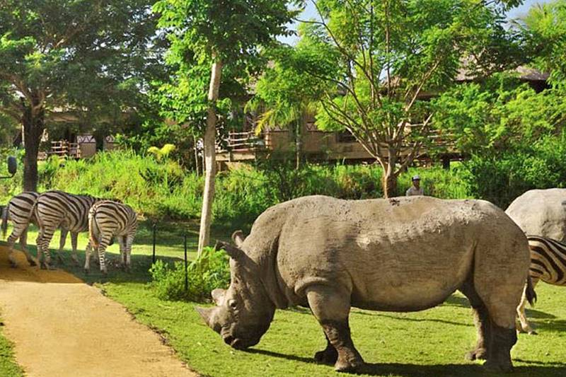 Holiday Well-Spent In Bali Safari Park 9