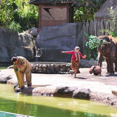 Bali Safari Marine Park Tickets