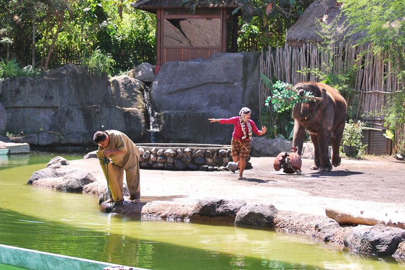 Interesting elephant show