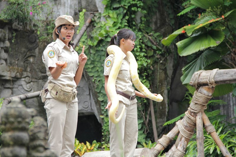 Explore Bali Safari Park with Dragon Package 2