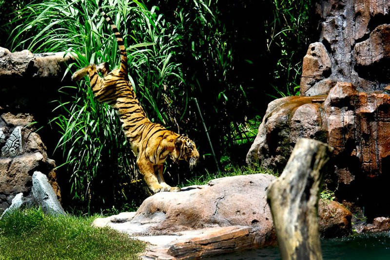 Bali Safari Park Wildlife Conservation Programs