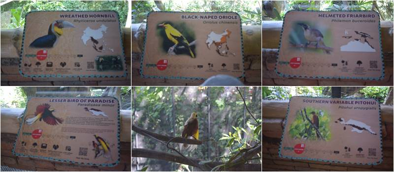 Birds collections at the front of Barong cafe for all Bali Safari Marine Park visitors