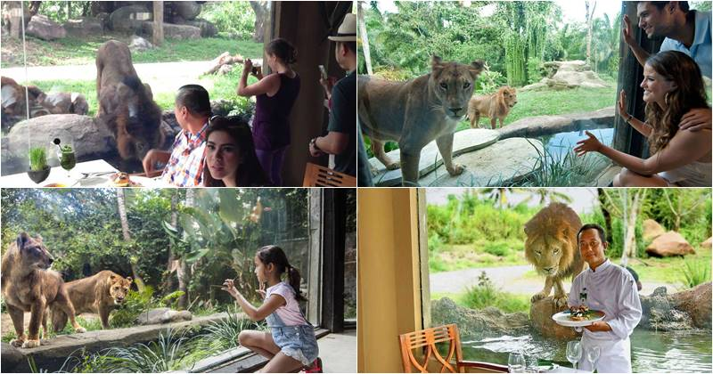 breakfast with lion bali safari marine park
