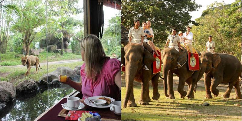 Breakfast With Lion Elephant Ride Bali Safari Untuk Domestik 2