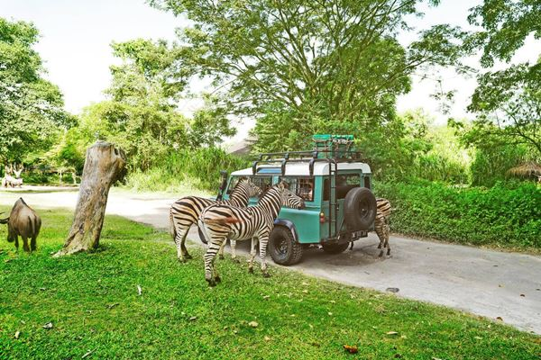 Special Discount Ticket for Bali Safari and Marine Park  Price 2019-2020 10