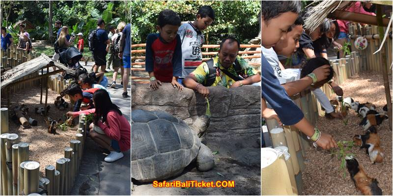 Complete Price List Bali Safari Marine Park and Details Package 2020 2