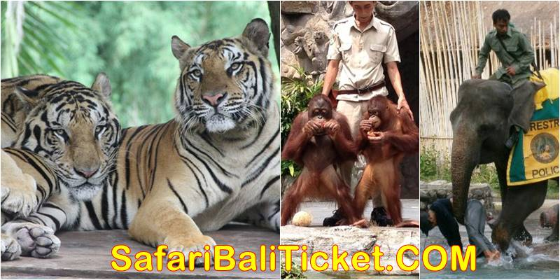 Bali Safari Elephant Back Ride Safari Promo 2019-2020 5