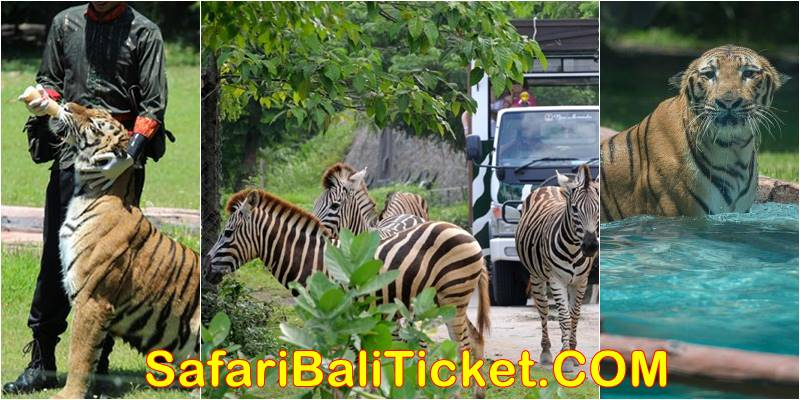 Bali Safari Elephant Back Ride Safari Promo 2019-2020 4