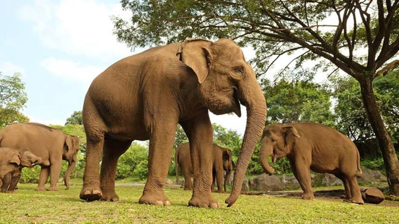 African Elephant: The Loving Giant 1