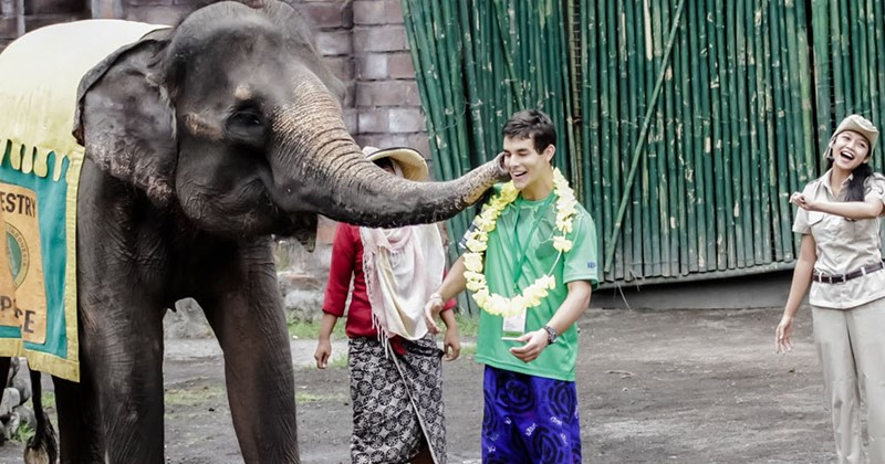 Elephant show at Bali Safari Park