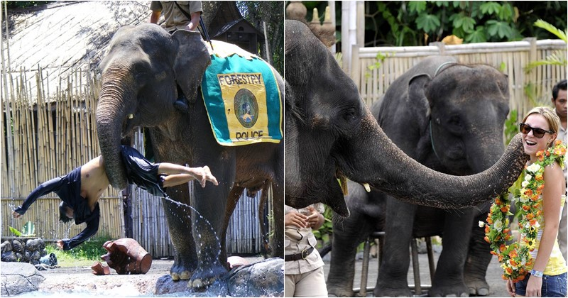 jungle hopper package promo ticket includes see the elephant show at bali safari marine park