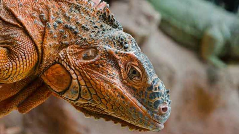 The Trace of Evolution in Reptiles 2