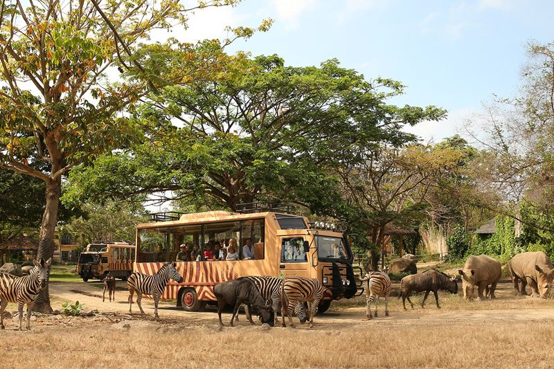 Bali Safari Park Jungle Hopper Package with Private Transfer 2019-2020 1