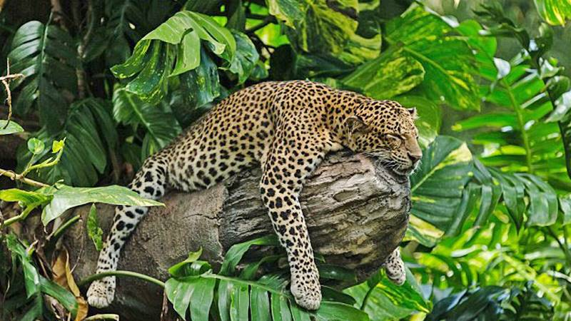 Bali Safari Leopard Package