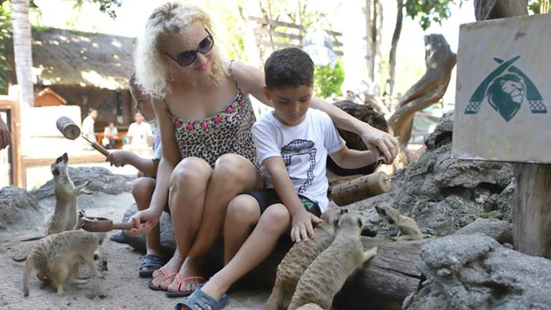 Let's Meet The Meerkats Personally: The-High Social and Quirky Mammal in Bali Safari Park 3