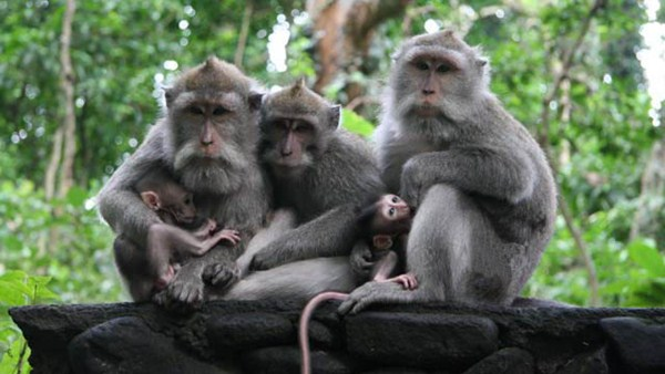 Sacred Monkey Forest in Ubud - Tips for Visitors 1