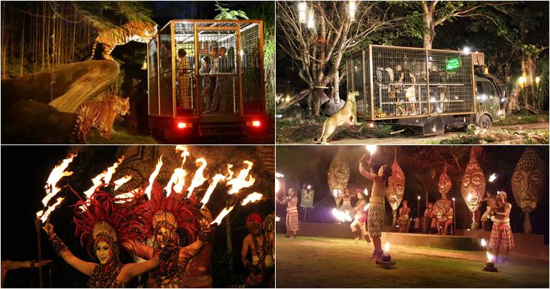 Amazing Night Safari Package Bali Safari Park 2020 2