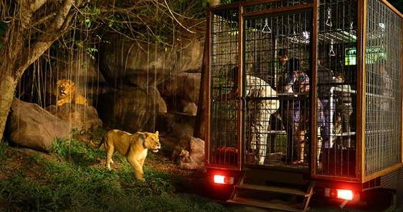 night safari bali safari package