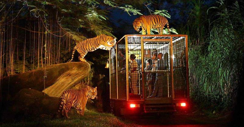 Amazing Night Safari Package Bali Safari Park 2020 3