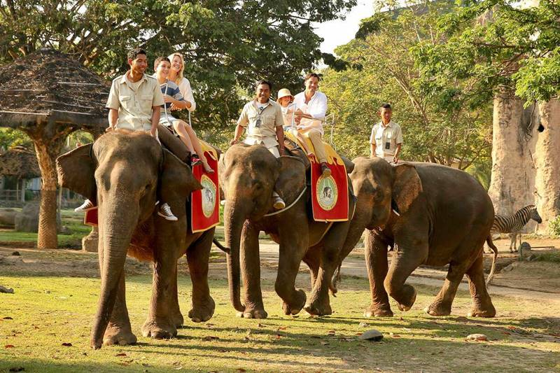 Elephant back safari package