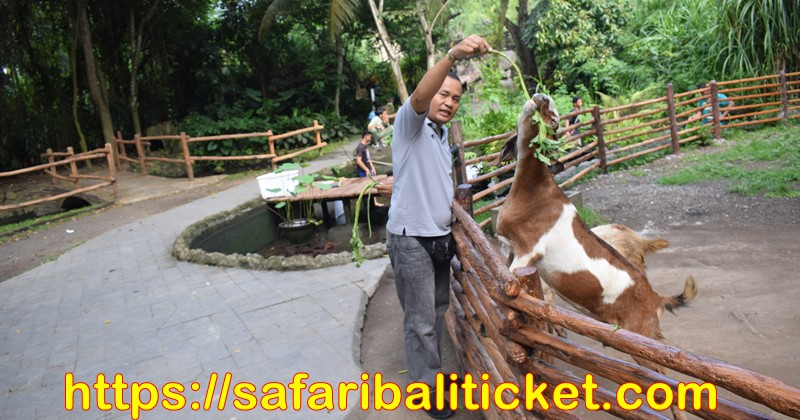 packages at Bali Safari marine park