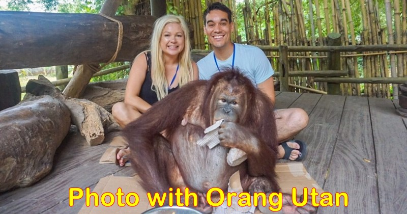 "Discover Orangutan ""The Man Of The Forest"" at Bali Safari Park 2"