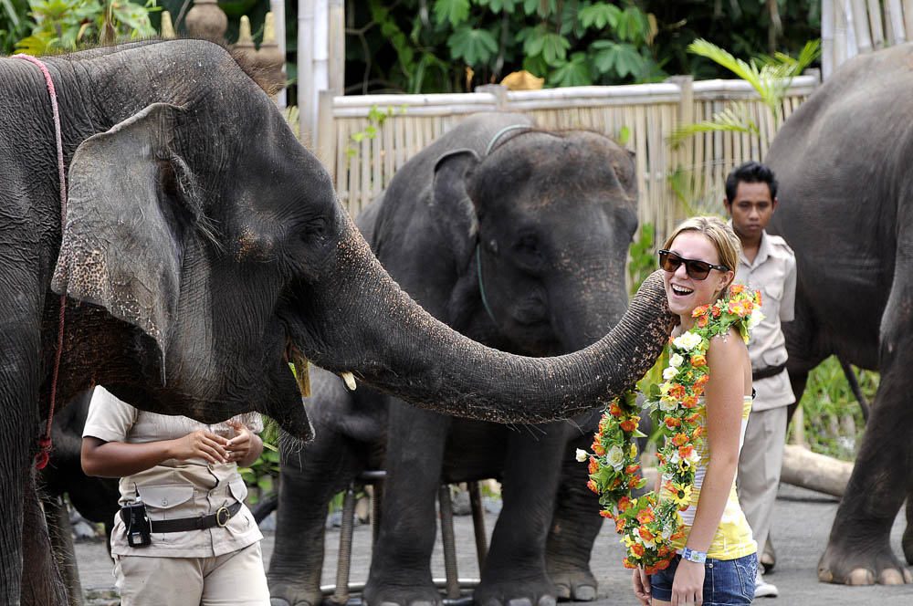 Bali Safari Jungle Hopper - The Most Popular Package 7