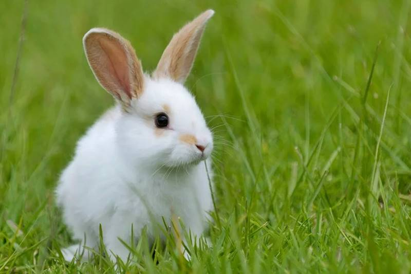 Behind The Cuteness of a Rabbit 1