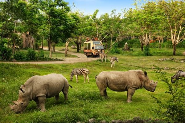 Special Discount Ticket for Bali Safari and Marine Park  Price 2019-2020 11