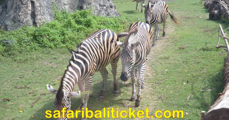 Bali Safari Park ticket