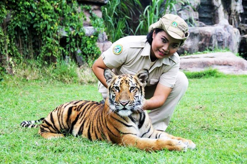 Get Closer with Lions and Tigers at Bali Safari Park 1