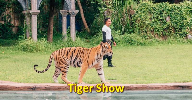 tiger show included on jungle hopper package ticket promo