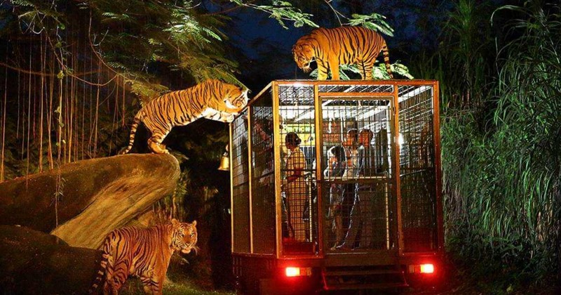 bali night safari tour package