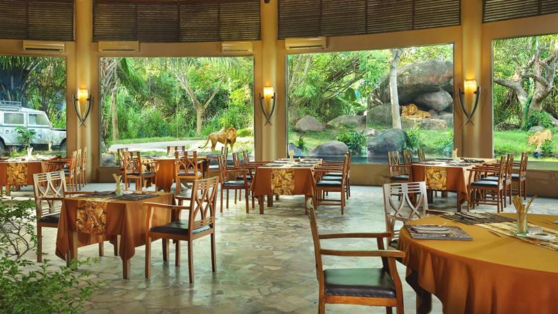 Breakfast with Lion - Tsavo Lion Restaurant